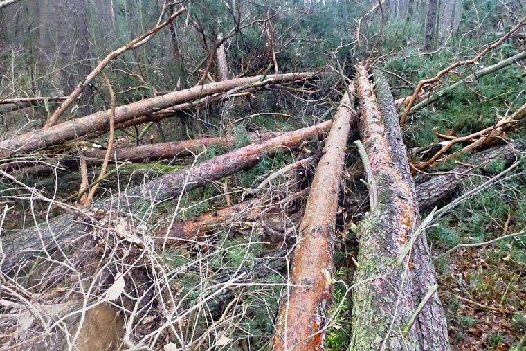 RDLP Radom: Leśnicy szacują szkody od wiatru