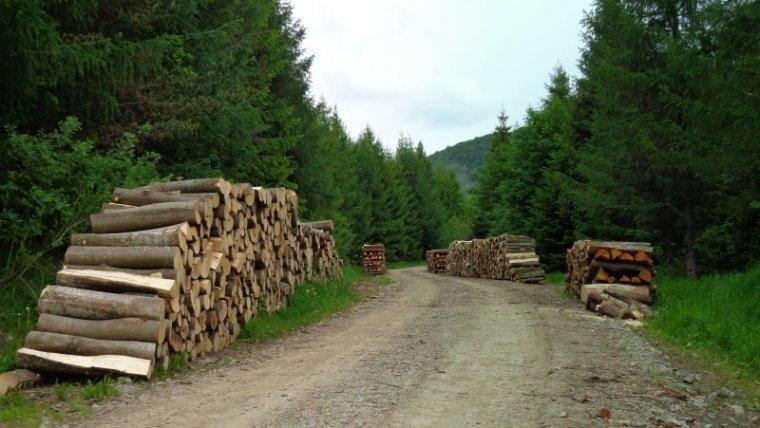 Powiększenie obszaru LKP nie wpłynie na poziom pozyskania drewna
