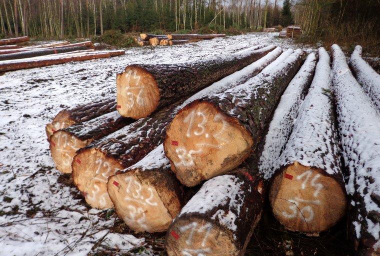 Lasy Państwowe przeprowadzą w marcu dodatkową turę sprzedaży drewna