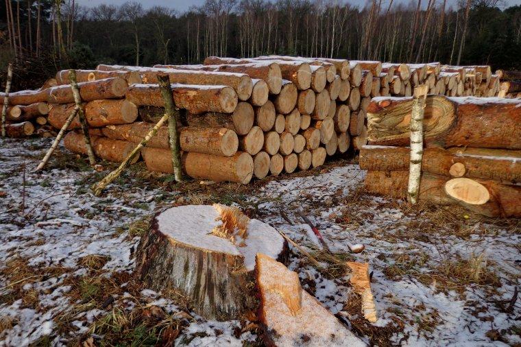 Oświadczenie Polskiej Izby Gospodarczej Przemysłu Drzewnego w sprawie komunikatu dyrektora generalnego Lasów Państwowych