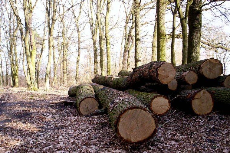 Tylko pięć dni na zgłoszenie się do udziału w dodatkowej turze sprzedaży drewna