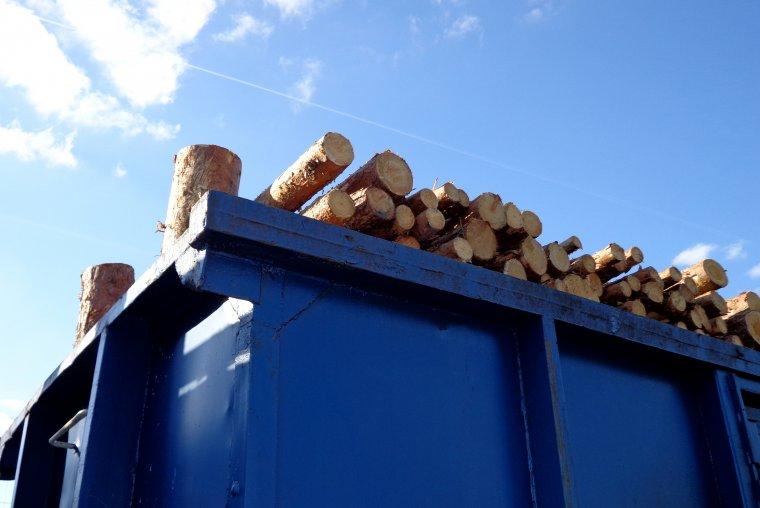 Szczególną uwagę na nowe przepisy muszą zwrócić firmy importujące drewno spoza Unii Europejskiej