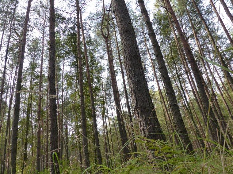 PiS chce poszerzyć wrześniowe referendum o pytanie dotyczące Lasów Państwowych
