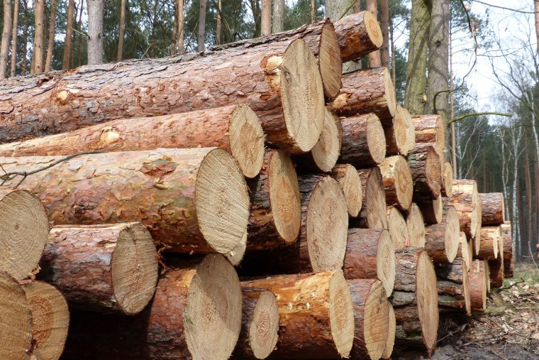 Zmiana zasad sprzedaży drewna na rok 2016