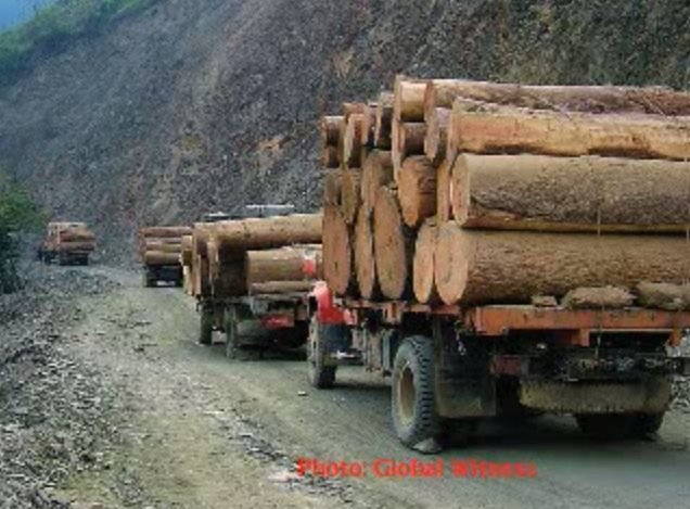 Nielegalnie pozyskane w Birmie drewno jest przemycane głównie do Chin