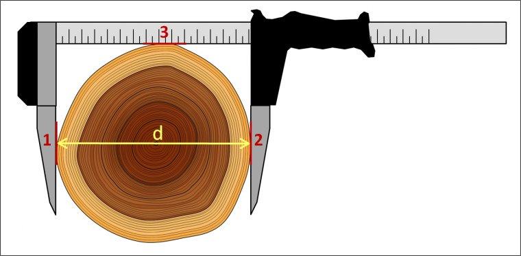 Trzy punkty styku średnicomierza z pobocznicą pnia - ważna zasada prawidłowego wykonania pomiaru