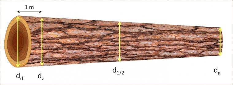 Średnice mierzone na drewnie okrągłym
