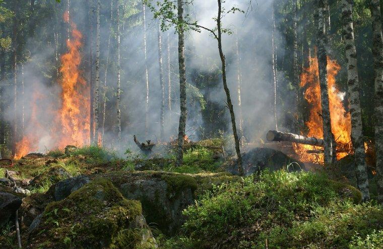 Celowe podpalenia lasów to plaga