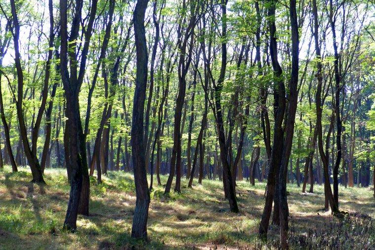 NIK krytykuje gospodarkę finansową Lasów Państwowych