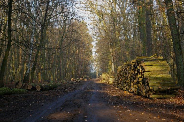 Lasy Państwowe chcą wznowić działalność Komisji Leśno-Drzewnej