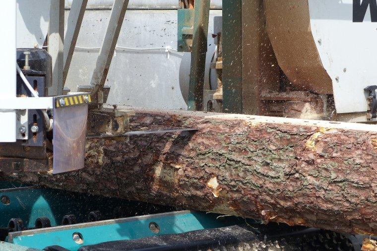 Białoruś stawia na przemysł drzewny