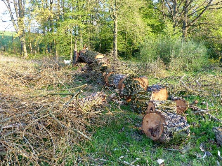 Mniejsze opłaty za wycinkę drzew