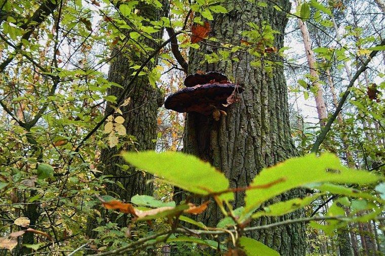 Sejm znowelizował przepisy dotyczące Państwowej Rady Ochrony Przyrody i funduszu leśnego
