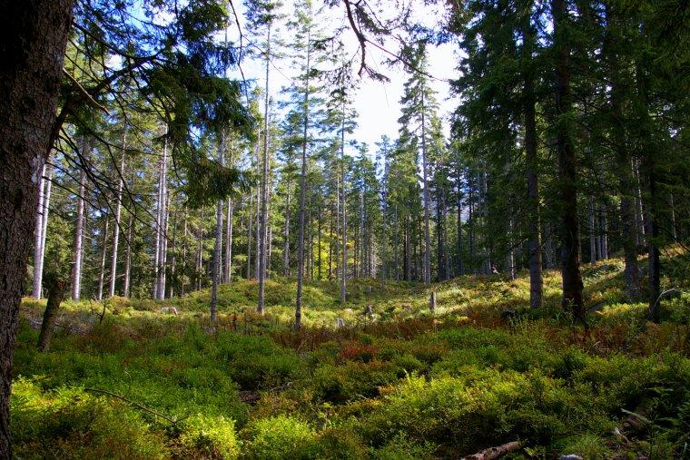Blisko 1000 osób zatrudnią Lasy Państwowe do inwentaryzacji bioróżnorodności