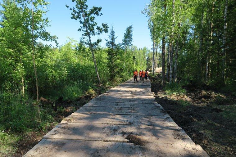 Łotewskie Lasy Państwowe wykorzystują do wywozu surowca drogi wykonane z drewna