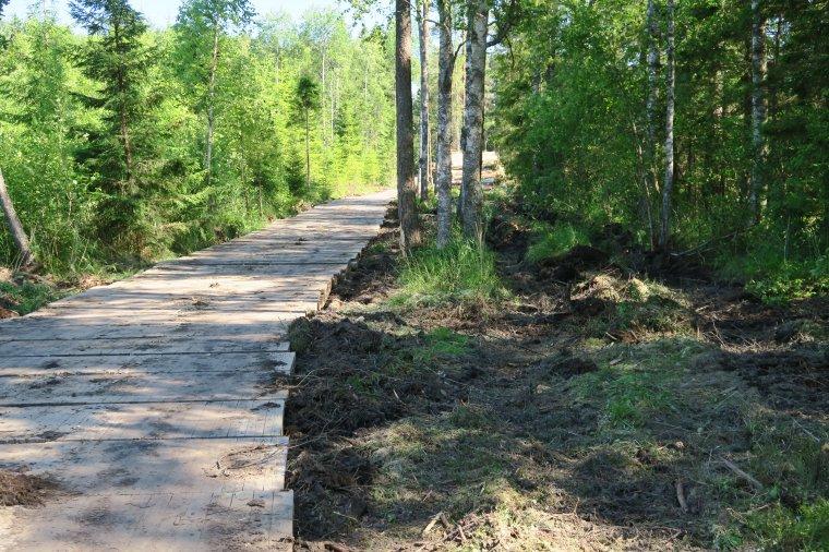 Koszt budowy 1 km odcinka drewnianej drogi to ok. 150 tys. euro.