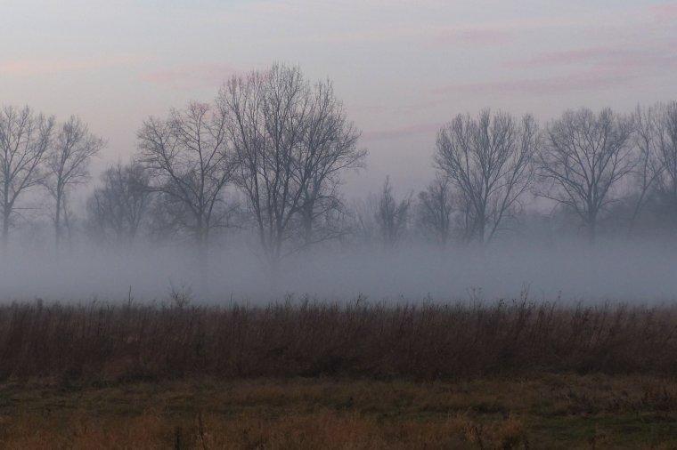 Od 1. maja br. perspektywa zostania właścicielem lasu stanie się mglista, decyzja zależeć będzie od nadleśniczego...