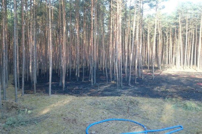 Tragiczny pożar lasu