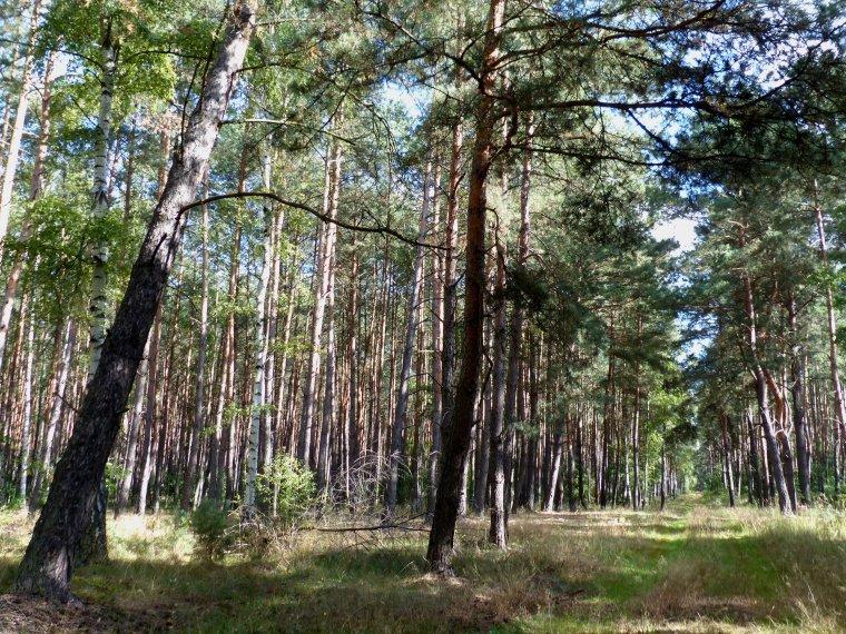 Sejm przyjął nowelizację ustawy o lasach dającą Lasom Państwowym prawo pierwokupu gruntów leśnych