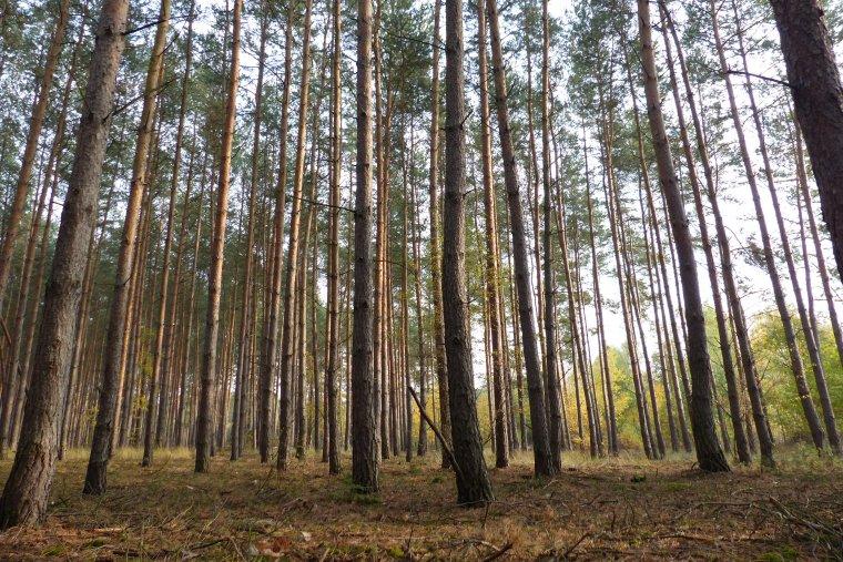 Senat przyjął nowelizację ustawy o lasach bez poprawek