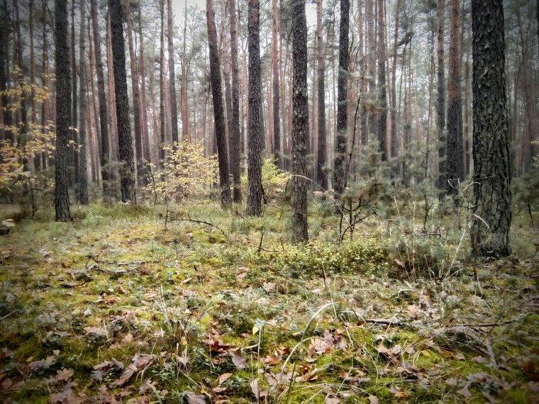 Prezydent podpisał nowelizację ustawy o lasach