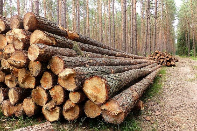 Polska jest drugim, największym dostawcą surowca drzewnego do Niemiec