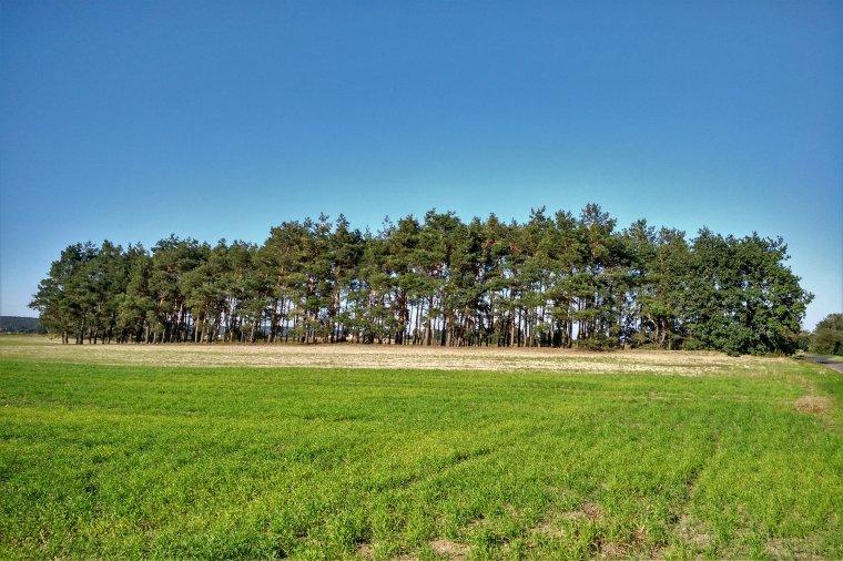 Czy na własnym lesie można zarobić?
