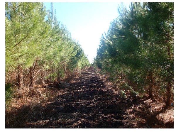 Czy importując biomasę z USA niszczymy tamtejsze lasy?