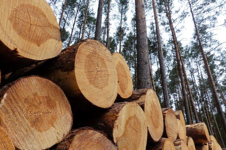 Zasady sprzedaży drewna na rok 2017 opublikowane