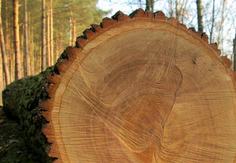 Szereg zapisów nowych zasad sprzedaży drewna oceniony negatywnie przez PIGPD