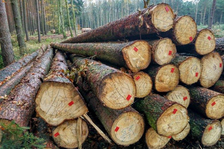KPPD: Niższe ceny drewna poprawiają wyniki