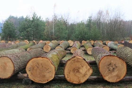 VII Submisja Drewna Cennego Lubelska Jesień 2016