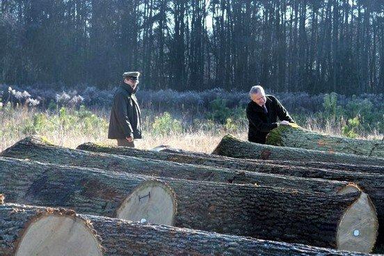 II Regionalna Submisja Drewna Cennego RDLP w Radomiu