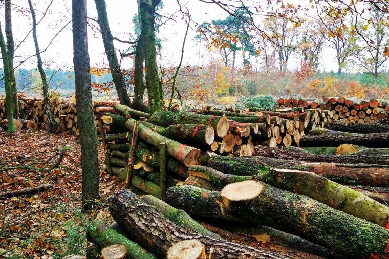 Projekt rozporządzenia w sprawie drewna energetycznego