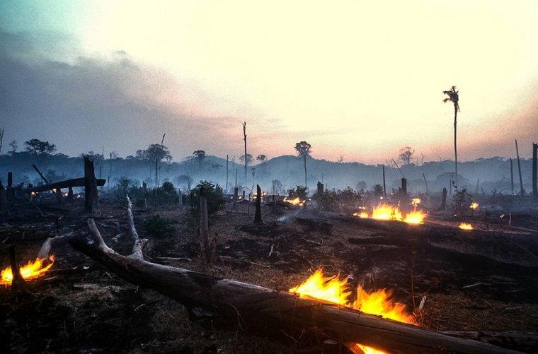 Wypalanie lasów pod potrzeby rolnictwa to jedna z głównych przyczyn wylesiania