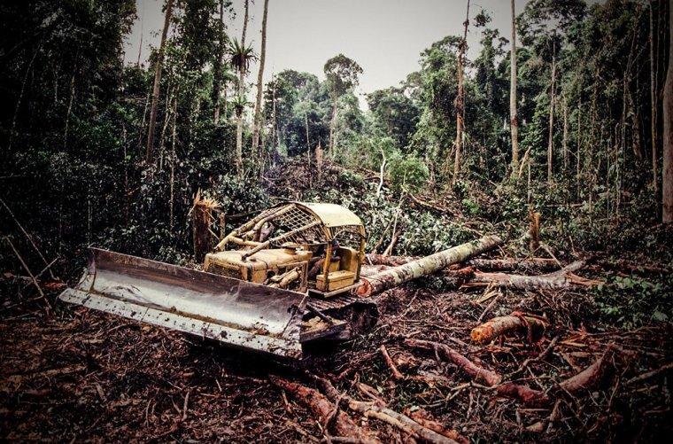 W związku z prowadzonymi projektami urbanistycznymi niszczone są znaczne obszary terenów leśnych