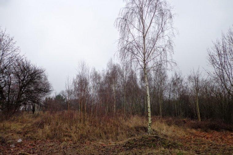 Właściciel tej 1 ha działki, który chciał ją oczyścić z samosiejek musiał wystąpić o zgodę na usunięcie blisko 500 drzew.