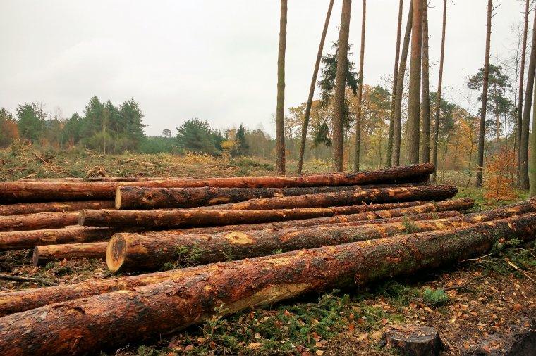 Zasadnicza sprzedaż drewna na rok 2017 zakończona