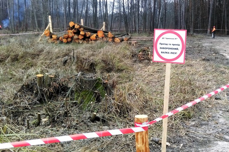 Zawieszenie w próżni - czyli codzienność ukraińskiej gospodarki leśnej