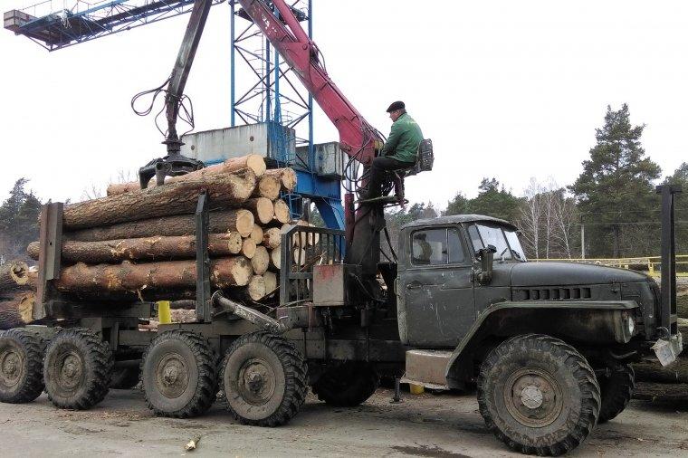 Nowe drogi leśne mają m.in. poprawić logistykę transportu surowca drzewnego