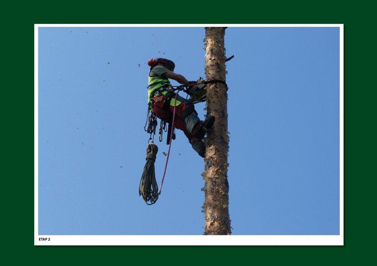 Etap 2 - Podejście po pniu i podkrzesanie tylców oraz części żywych gałęzi