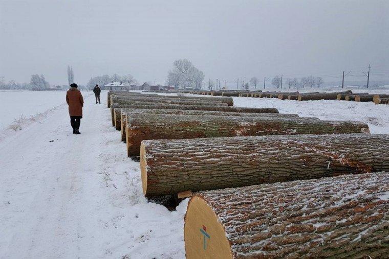 26. Aukcja Cennego Drewna Dębowego w Krotoszynie