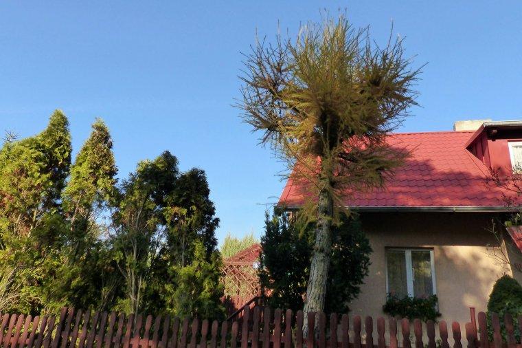 Nowe przepisy w sprawie usuwanie drzew i krzewów - Odpowiedzi na najczęściej zadawane pytania