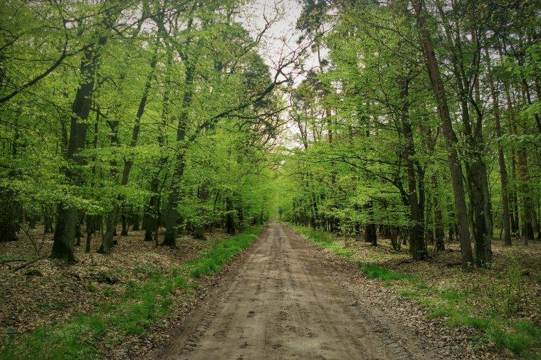 Lasy Państwowe szeroko wykorzystują nieostrą definicję gospodarki leśnej, by płacić niższe podatki