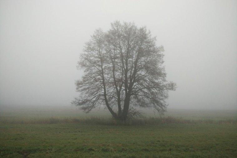 Nowelizacja ustawy dotyczącej wycinki drzew podpisana przez Prezydenta