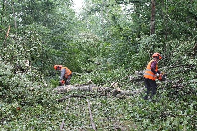Usuwanie drzew zwalonych na szlak kolejki wąskotorowej