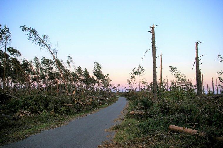 Drewno z wiatrołomów sprzedaje się słabo - wysokie ceny i skomplikowane procedury