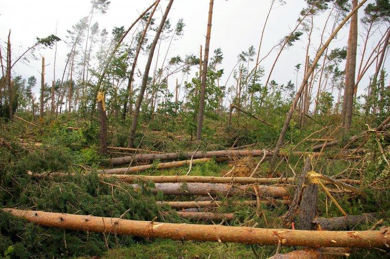 """""""Racjonalna gospodarka"""" drewnem z wiatrołomów w wykonaniu Lasów Państwowych"""