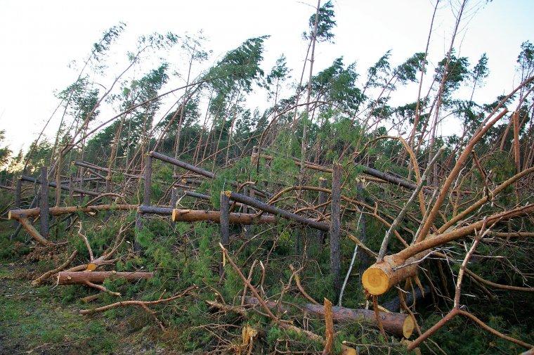 """Porażka dogrywki w ramach """"puli rozwojowej"""". Teraz drewno poklęskowe będą mogli nabywać wszyscy"""