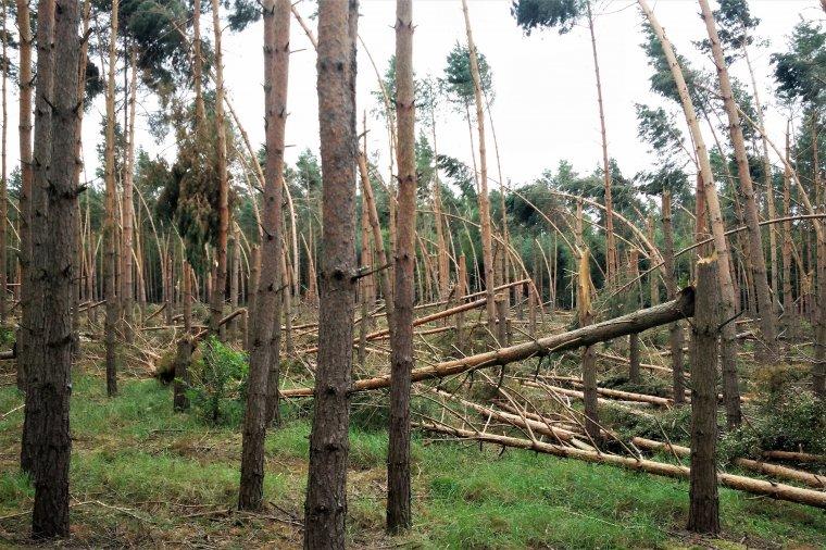Po orkanie Ksawery kolejne 0,5 mln m3 wiatrołomów w polskich lasach